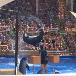 Dolphin show worth catching