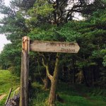 Lovely woodland walk