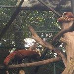 Foto de Saarbrucker Zoo