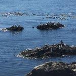 Foto di Scenic Marine Route