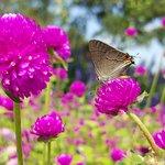 Butterflies resting.