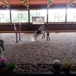 Foto di Lipica Stud Farm (Kobilarna Lipica)