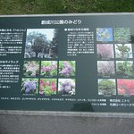 Information on flowers and trees in the park