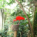 Photo de Butterfly Park Empuriabrava