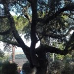 Foto de Giardino dei Sugheri