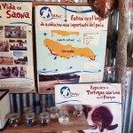 Turtle conservation centre - Saona Island Tour