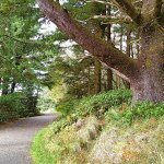 Cape Disappointment: Nature Walk path to one of 2 historic lighthouses