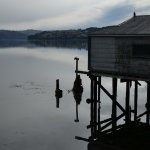 Boat shed at Otago Harbour