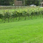 Glades Pike Winery Foto