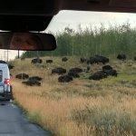 Foto de BrushBuck Wildlife Tours