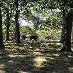 Grant's Farm Foto