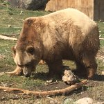 Foto de Montana Grizzly Encounter