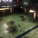 Sharks at the crepe restaurant