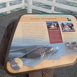Information Sign, Sea Lions, Santa Cruz Wharf, Santa Cruz,Ca