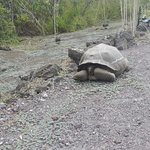 tortoise at the side of the trail to the Wall of Tears
