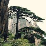 Photo of Greeting Pine (Ying Ke Song)