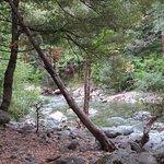 Herrington's Sierra Pines Resort Foto