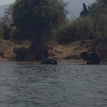 Elephants are everywhere.