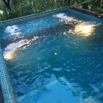your private plunge pool surrounded by trees