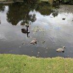 Birds and ponds to explore