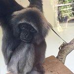 Cutest monkey ever