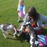 Sunny days at hardys animals Farm feeding the goats