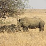 Rhino family at Rietvlei. 2 adults and 2 kids
