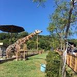 Photo of Misaki Amusement Park