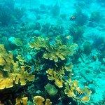 Riff vor Playa Ancon