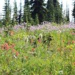 Mount Revelstoke National Park Foto