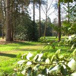 Sandringham Estate Woodlands