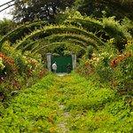 Foto de Casa y Jardines de Claude Monet