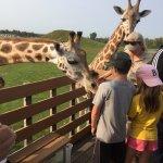 Up Close with a Giraffe