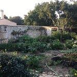 Jardin potager du restaurant