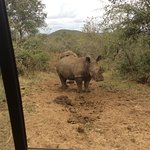 Mum and baby rhino watched them for ages