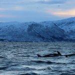 Bilde fra Arctic Adventure Tours - Day Tours