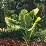 Memphis Botanic Garden
