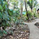 The winding path leads to the six different jungle cabanas