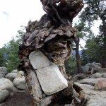 rock-tree marriage
