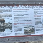 Viewing & Photographing Bears