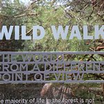Welcome to the Wild Walk