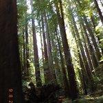 Redwoods on Mattole Rd