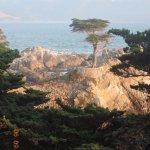 The Lone Cypress Tree