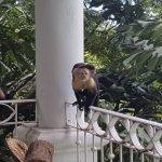 Mono con su bebe
