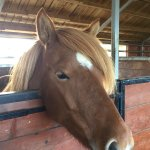 Sweet champion horse my daughter loved!