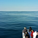 Photo of Dolphin Fleet Whale Watch
