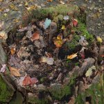 dead tree stump with leaves
