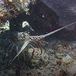Photo of Dive Charter Curacao