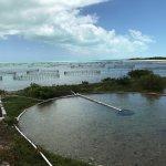 Caicos Conch Farm