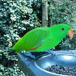 Gorgeous parrot landed by us to grab some food